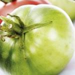 Зеленыепомидоры