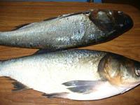 Рыбные <b>котлеты</b>